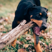 How to lower your risk for a dog bite insurance claim in Salt Lake City